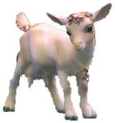 Heidi's Goat